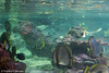 IMG_0692 (10Rosso) Tags: acqua acquario genova pesci pesce mare acquariodigenova aquarium genovaacquarium