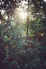 IMG_7287 (J Diffner) Tags: lensbaby twist60 blur bokeh nature fantasy sunset sony a7r2 a7r ii tujunga california