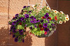 Hanging basket (♥ Annieta  off/on) Tags: annieta juni 2017 sony a6000 holiday vakantie england scotland uk greatbritain allrightsreserved usingthispicturewithoutpermissionisillegal