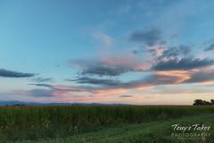 Sunrise over a Colorado corn field