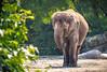 Tierpark Berlin (Zarner01) Tags: porträt tiere tiger elefanten tierpark berlin zoo deutschland germany tier canon eos 750d giraffe schloss statue is stm 55250