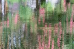 Summer Water Abstract (norasphotos4u) Tags: canonef100400f4556iiusm canon7dmkii ©noraleonard water abstract flowersplants social flickr reflection