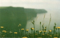 Moher (Lore Stars) Tags: pentaxmv autochinon50mmf17 film analógica lorestars 35mm paisaje landscape travel ireland expired crossprocessed qss100 grain flowers yellow naturaleza nature cliffsofmoher