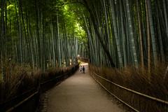 the path of bamboo, revisited #42 (Sagano, Kyoto) (Marser) Tags: xt10 fuji raw lightroom japan kyoto sagano bamboo bamboogrove path people 京都 嵯峨野 竹林