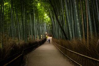 the path of bamboo, revisited #42 (Sagano, Kyoto)