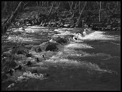 Weir (radspix) Tags: mamiya 645 1000s 55110mm sekor f45 bergger pancro 400 pmk pyro