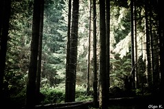 DSC_3651 (Olga Kapushtenska) Tags: wood tree bridge putila chernivtsi nature mountains water pine christmas river bukovina путила буковина карпаты горы лес сосны река природа olga k