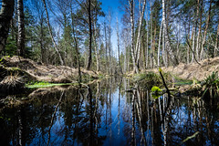 Natural Mirror (*Capture the Moment*) Tags: 2017 bavaria bayern birches birke birken bäume elemente filzn fotowalk germany himmel landschaften matthias natur nature reflexion sky sonya7m2 sonya7mii sonya7mark2 sonya7ii sonyfe1635mmf4zaoss sonyilce7m2 spiegelung trees wasser water
