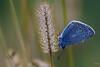 La leggerezza mattutina (Denis Brignone) Tags: batterfly morning farfalla rugiada macro vivitar
