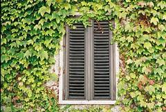 F1000003 (saracarodrigues) Tags: pentax spotmatic asahipentaxspotmatic fujicolor200 setubal portugal 1stroll experience window plants