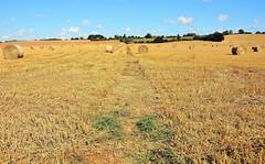 28950 (benbobjr) Tags: lincoln lincolnshire midlands eastmidlands england english uk unitedkingdom gb greatbritain britain british eastlindsey spilsby hundleby ivotallboys ivotallebois path pathway footpath bridleway publicfootpath oldbolingbroke village