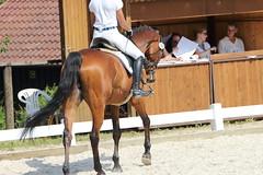 _MG_5684 (dreiwn) Tags: dressage dressurprüfung dressurreiten dressurpferd dressyr ridingarena reitturnier reiten reitverein reitsport ridingclub equestrian horse horseback horseriding horseshow pferdesport pferd pony pferde dressur dressuur tamronsp70200f28divcusd