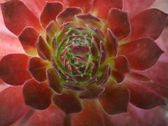 Light At The Edge (Professor Bop) Tags: plant professorbop drjazz olympusem1 hensandchicks macro