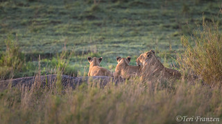Serengeti Morning