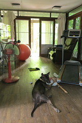 hersey in our living room with some of the stuff she chews on daily (the foreign photographer - ฝรั่งถ่) Tags: hersey our dog chew stuff chair fan balance ball side door house bangkhen bangkok thailand canon