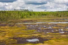 IMG_3083-1 (Andre56154) Tags: schweden sweden sverige see lake wasser water ufer wolke cloud himmel sky landschaft landscape forest