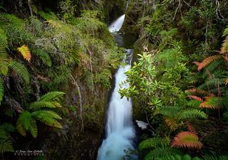 La pequeña cascada - Parque Nacional Pumalin (Patagonia Chile)