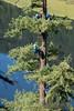 EOG-14.jpg (Joel Spooner Photography) Tags: arblife arborist bc expeditionoldgrowth joelspooner joeliphoto climbtrees exploretrees explorebc inspire learntoclimb oldgrowth treeclimbing