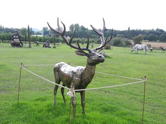 Stag (daveandlyn1) Tags: s9100 coolpix nikon animal stag metalwork britishironworkscentre nroswestry shropshire field