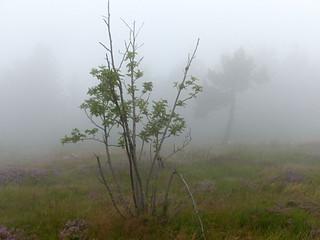 Hornisgrinde im Nebel - Black Forest foggy