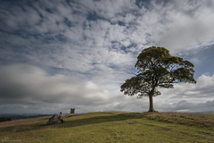Still bored! (andyrousephotography) Tags: lymepark lymehouse nationaltrust estate house nationalheritage gradei listedbuilding grounds thecage walk trees hangingabout bored wife leefilters 06ndgrad 10stops bigstopper andyrouse canon eos 5d mkiii ef1740mmf4l