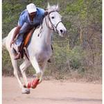 The Rider thumbnail