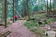 Wandern im Elsass zum Château du Wasenbourg