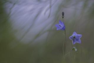 Fragile in purple