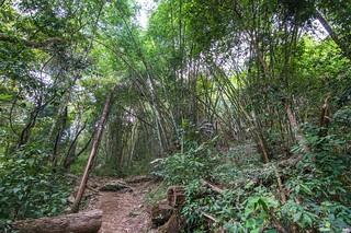 ramkhamhaeng national park - thailande 22