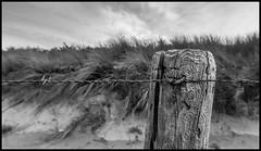 Protected (Ramon Quaedvlieg Photo) Tags: protected netherlands noordwijkerhout dune pole barbwire barbedwire wood weathered dutch sky clouds travel nationaltrust blackandwhite blackandwhitephotography sanddune