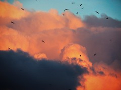 Clouds and Seagulls in the Sky - by Gianni Del Bufalo  CC BY 4.0 (bygdb - Gianni Del Bufalo (CC BY)) Tags: sky gabbiani nuvole cielo stormo seagull cloud cloudsstormssunsetssunrises