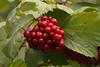 Fruit (DJWGA) Tags: oostvaarderplassen