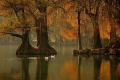 Lago Camécuaro Tangancícuaro en Michoacán (NIKONIANO) Tags: agua árbol árbolesenméxico bigfav camecuaro colorescálidos ecosistema enméxico lago lagodecamécuaro mexicano méxico michoacán naturaleza nature otoño sabino sabinos surreal water