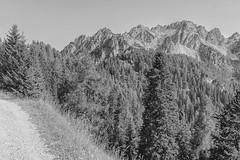 biancoenero (conteluigi66) Tags: boschi pendici cime mountain monochrome luigiconte cima bosco alberi