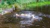 Purdy, Charlie and Agnes swimming (Mark Rainbird) Tags: thelookout retriever ufton powershotg7xmarkii dog canon puppy uk bracknell agnes charlie purdy surreyheathdistrict england unitedkingdom gb