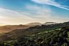 tilden-033 (Yvonne Rathbone) Tags: orinda morning 1855mmf3556gvr oakscrub parks tilden green hills woodland eastbayregionalparks nikon ebparksok