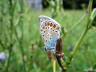 Butterfly 1404
