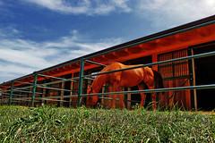 Give me a little gift (alternata_) Tags: nature horse trentino adige italy summer animal trentinoaltoadige