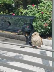 8-12-2017: Bird bench. Boston, MA