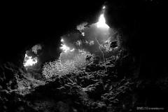 Red Sea (Dive Live) Tags: red sea underwater nauticam canong7x ysd2 uwl04 egito emperor diving diver dive mergulho fotosub life ocean mar vermelho