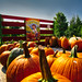 A Child's Dream (downstreamer) Tags: leelanau michigan samyang12mm autumn pumpkin northport unitedstates