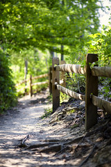 not far enough (Satirenoir) Tags: virginia summer masonneckstatepark masonneck park forest hike hiking path