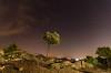 Noche de Perseidas. (Amparo Hervella) Tags: perseida estrellafugaz estrella árbol naturaleza paisaje nube manzanareselreal comunidaddemadrid españa spain nocturna lightpainting roca largaexposición d7000 nikon nikond7000 comunidadespañola