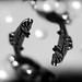 Picean (tam_and_john) Tags: zodiac macromondays
