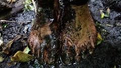 photo_2017-07-30_00-58-03 (bfe2012) Tags: barefoot barefeet barefooting barefooted barefooter barefoothiking barefootlifestyle dirtyfeet
