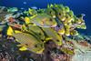 Lined up (merbert2012) Tags: westpapua indonesia papuaparadiseecoresort diving underwater underwaterphotography nature nationalpark wildlife scuba fish ocean nikond800 aquaticahousing travel fun