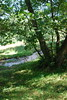 2017-08-28 cannock chase 044 (sonya.britton) Tags: cannockchase staffordshire ancientforest wood forest walk family tree stream