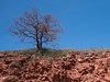 Blue sky, red earth (Nanooki ʕ•́ᴥ•̀ʔっ) Tags: albania europe location macedonia lonetree red redearth earth bank buswindow bluesky ruleofthirds composition tree emptyspace landscape