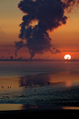 Backlight. (alan.irons) Tags: fog vapour estuary humber clouds seascape dawn sunrise sun sky water river hull kingston mud seagulls feeding turbines cooling towers backlight jetty bouy