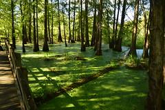 Lafayette 4 (Krasivaya Liza) Tags: lafayette la louisiana bayou bayous swamp swampland swamptour south southern usa nature